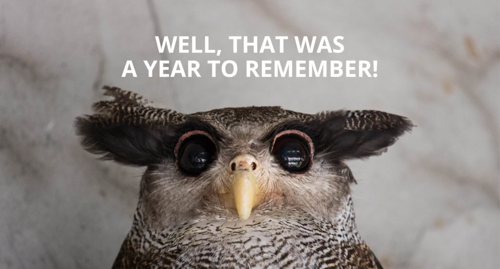 COMPRESS.dsl, Well, that was a year to remember!, We shan't be forgetting 2020 in a hurry, it's time to sail off into the sunset, An owl looking very confused with wide opened eyes