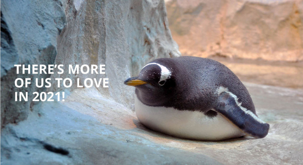 There's more of us to love in 2021! We have grown (in every way) - picture of an fat little penguin basking in the sun