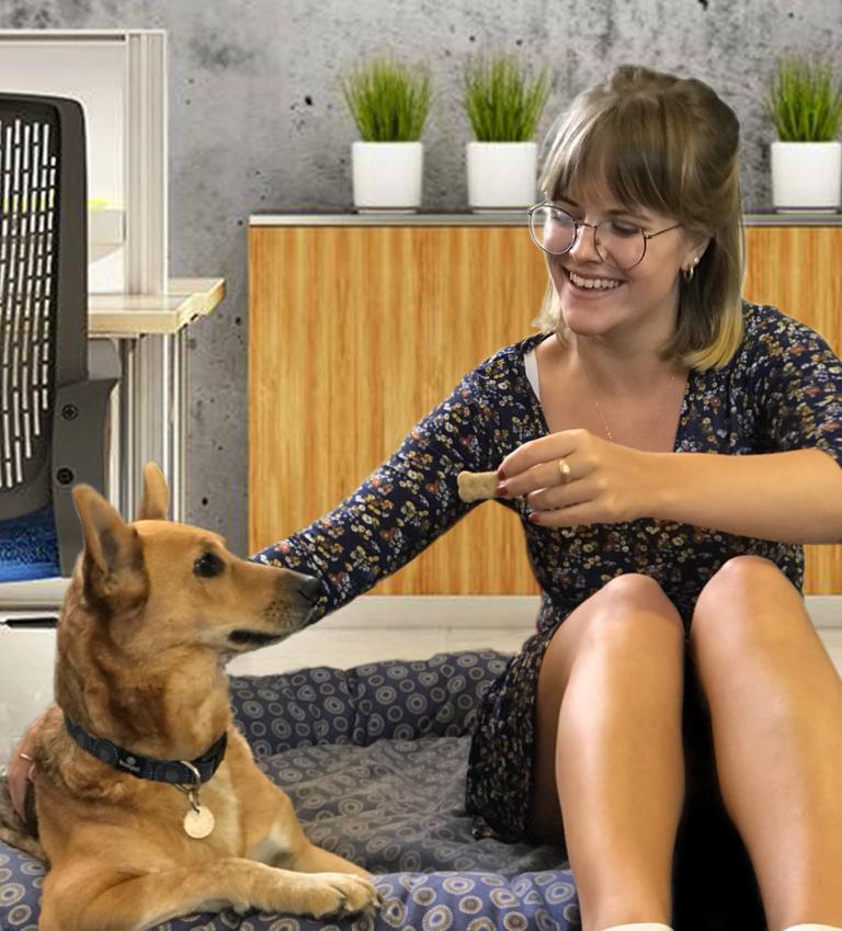 Our new interns - Indigo Wonky Dog and Bronwen
