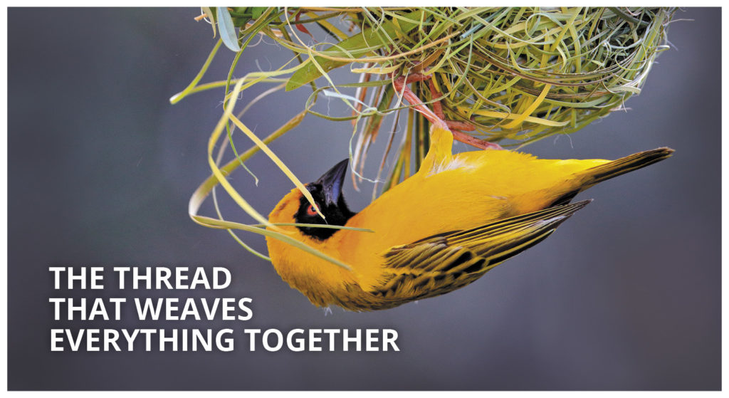 COMPRESS.dsl: The thread that weaves everything together – weaver weaving its nest