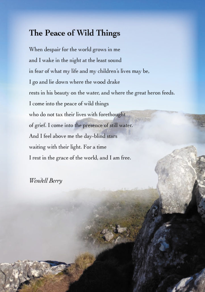 A poem by Wendell Berry_The Peace of Wild Things